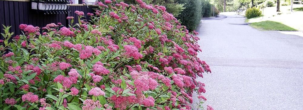 cropped-slider_1000x365_brf_blomma.jpg